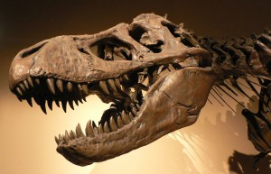 Ihm ging es vor 65 Millionen Jahren noch gut. Tyrannosaurus Rex. Foto: David Monniaux / Wikimedia Commons (CC BY-SA 3.0)