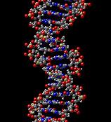 Kooperationsbereitschaft hängt von den Genen ab. Foto: theflyoverzone / Flickr