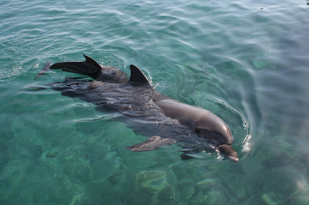 """Eilat - Dolphin reef"". Licensed under Creative Commons Attribution-Share Alike 3.0 via Wikimedia Commons"
