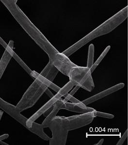 Ein Netzwerk aus porösen Kohlenstoffröhrchen: Aerographit unter dem Mikroskop. Foto: TUHH