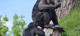 Evolutionstheorie unter Druck? Studie sieht Akzeptanz besonders unter muslimisch geprägten Lehramtstudenten schwinden