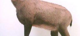 Arsen in Tierpräparaten: Die Gefährdung ist unklar – längst nicht alle sind untersucht