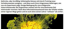 """Ähnlichkeiten mit lebenden Personen rein zufällig – Wissensmagazin (ernsthaft): """"Gehirnlose Einzeller geben Wissen an Artgenossen weiter"""""""