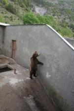Im Kormisosh-Auswilderungs-gehege in Bulgarien werden auch heute noch Bären gehalten.  © Aleksandar Dutsov, Balkani Wildlife Society.