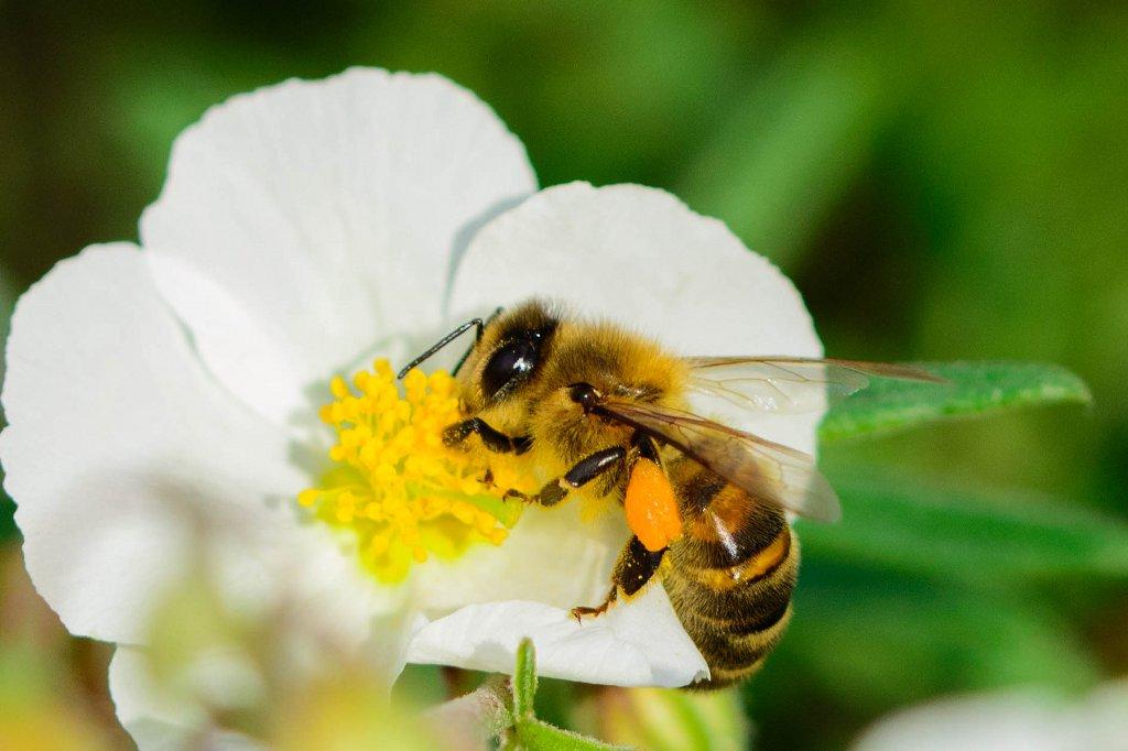 Bienchen und Blümchen-Aufklärung mag unumstritten sein, wird aber der heutigen Realität wohl kaum gerecht, Foto: Pierre Guezingar / flickr (CC BY-SA 2.0)