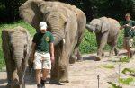 Elefanten im Zoo (hier in Wuppertal) – Die Tierrechtsorganisation Peta erhebt schwere Vorwürfe gegen den Zoo Hannover .Foto: Axel Schwenke/flickr(CC BY-SA 2.0)