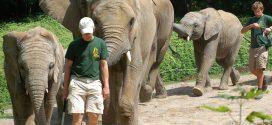 Tierquälereivorwürfe gegen Zoo Hannover: Kultusministerium stellt sich gegen Tierrechtsorgansation