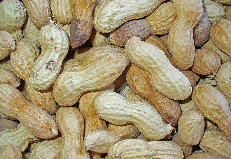 Können allergische Schocks auslösen: Erdnüsse. Foto: H. Zell / Wikimedia Commons (CC BY-SA 3.0)