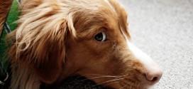 """Auf vier Pfoten im Unterricht: Wie ein Schulhund für Ruhe in der Klasse sorgt (jetzt gibt's sogar schon """"Lesehunde"""")"""
