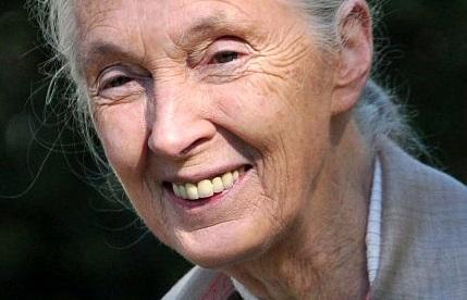 Forscherin und Aktivistin: Jane Goodall wird 80. Foto: Nick Stepowyj / Wikimedia Commons (CC BY 2.0)