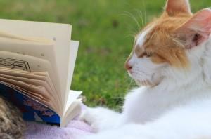 Vorlesen soll Katzen beruhigen und zugleich die Lesekompetenz der vorlesenden Schüler verbessern. Foto: Josh Antonio / flickr (CC BY-SA 2.0)