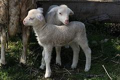 Zwillinge eigene sich besonders für die Forschung nach genetisch bedingten Verhaltensweisen. (Foto: Baerchen57/Flickr)