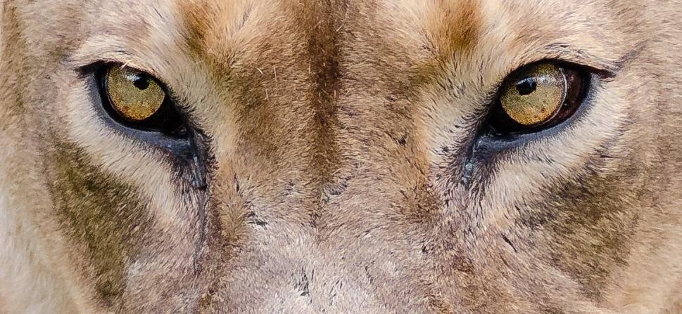"""""""Sie fordern immer mehr"""": Lehrerinnen berichten von ihrem alltäglichen Kampf mit """"Löwenmüttern"""""""