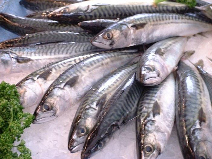 Die Makrele gehört, laut Greenpeace, zu den bedrohten Fischarten. (Foto: Jastrow/Wikimedia public domain)