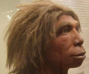 Kräftig gebaut, aber nicht sonderlich sozial: Der Neandertaler war aufgrund mangelnder kognitiver Kapazitäten vermutlich nicht gesellschaftsfähig. Foto: Thomas Kohler/Flickr (CC BY 2.0)