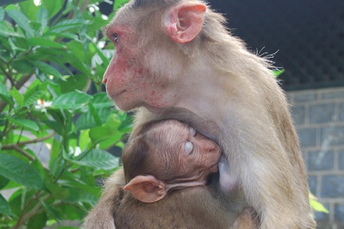Die Umarmung der Mutter stärkt Affenjunge für ein gesundes Leben Foto: 陈霆, Ting Chen, Wing/flickr (CC BY-SA 2.0)