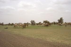 Svannenlandschaft in Mauretanien