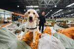 Zum ersten Mal, sagt der WWF, wurde ein Hund für den Artenschutz eingesetzt. (Foto: WWF)