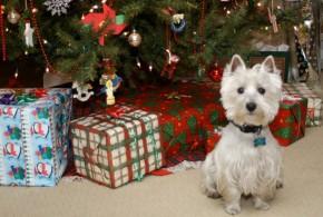 Was wir uns von unseren Leserinnen und Lesern zu Weihnachten wünschen …