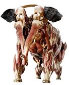 siatischer Elefant, Foto: © Gunther von Hagens' KÖRPERWELTEN der Tiere, Institut für Plastination, Heidelberg - See more at: http://www.3landesmuseen.de/KOERPERWELTEN-der-Tiere.1405.0.html#sthash.IzNcLnzt.dpuf