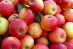 Äpfel sind unbestreitbar gesund; Foto: Karl-Heinz Laube / pixelio.de