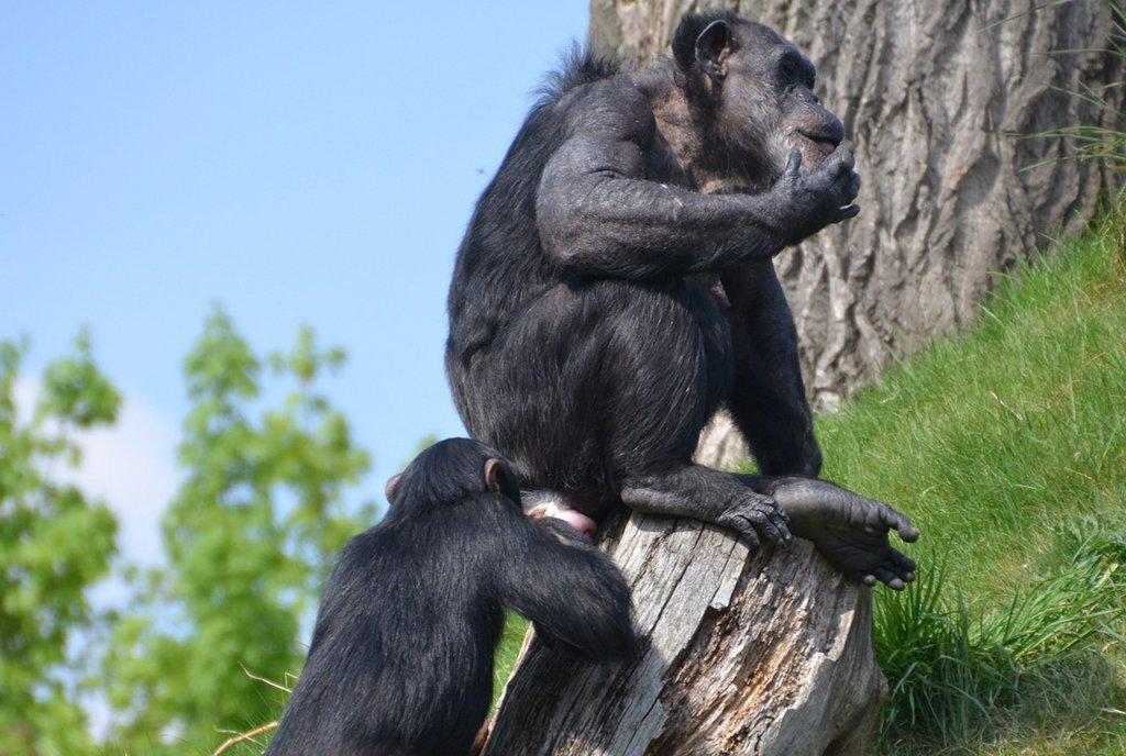 Für soziale Tiere wie Affen und Menschen ist die Erkennung von Artgenossen überlebenswichtig. Foto: 1447441 / pixabay (CC0 Public Domain)