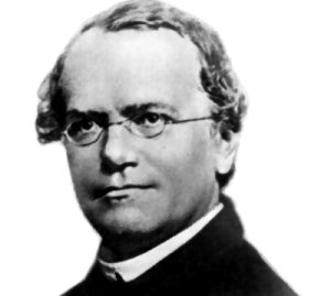"""Augustinerpater und Naturforscher, heute oft als """"Vater der Genetik"""" bezeichnet: Johann Gregor Mendel. Unbekannt – NIH / Wikimedia Commons"""
