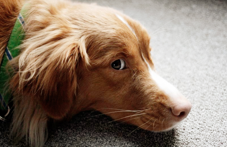 Ein Lesehund hört sich geduldig alles an. Foto: Christopher Woo /flickr (CC BY 2.0)