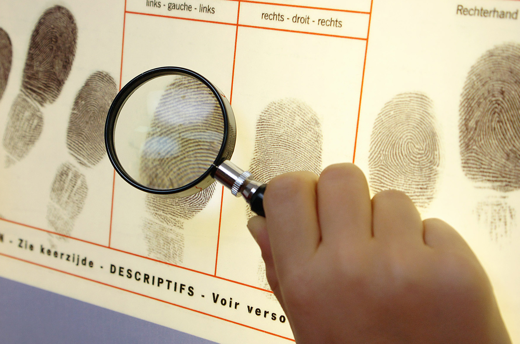 Kaum ein Mord bleibt spurenlos. Ein Vergleich von Fingerabdrücken führt vielleicht zum Täter! Foto: Königlich-Belgisches Institut für Naturwissenschaften