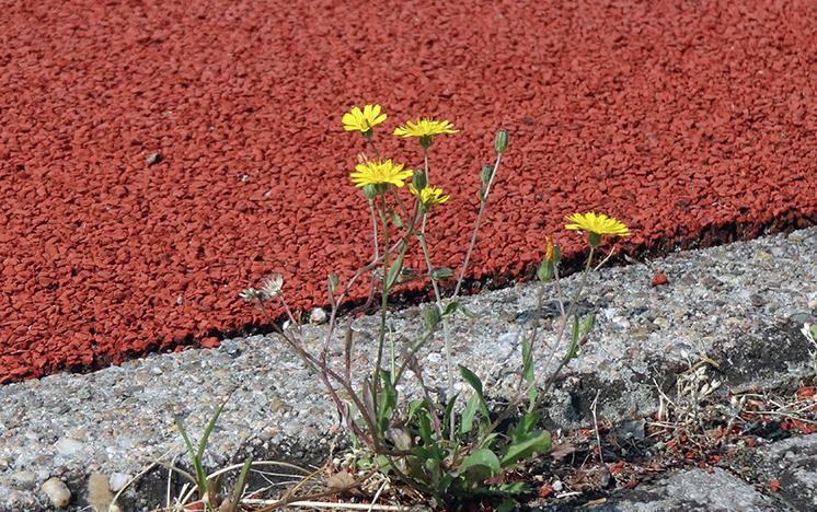 Liegt es am G8 oder am gesellschaftlichen Wandel, wenn die Sportplätze immer öfter verwaist bleiben? Foto: lichtkunst.73 / pixelio.de