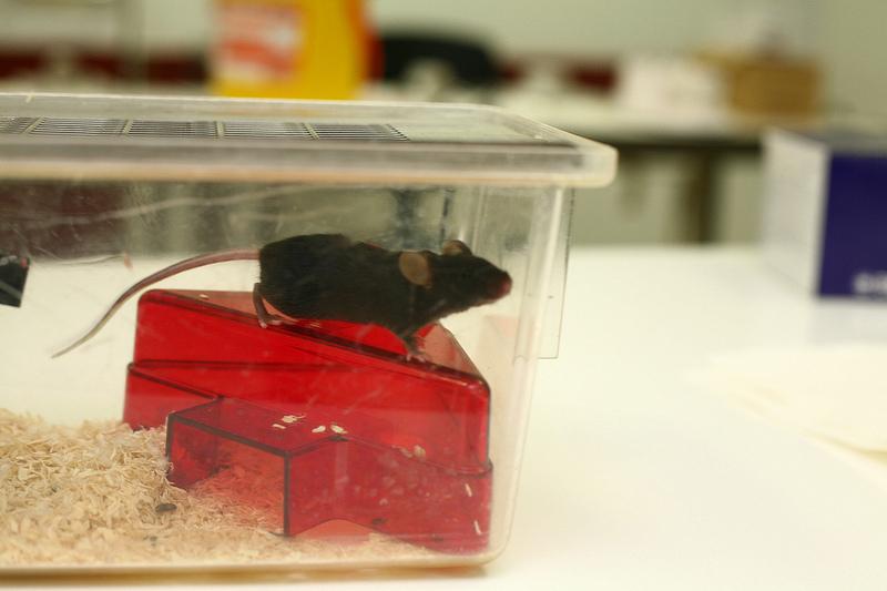 Tierversuche sind mittlerweile zum Tests von Kosmetika verboten. Foto: www.understandinganimalresearch.org.uk / flickr (CC BY 2.0)