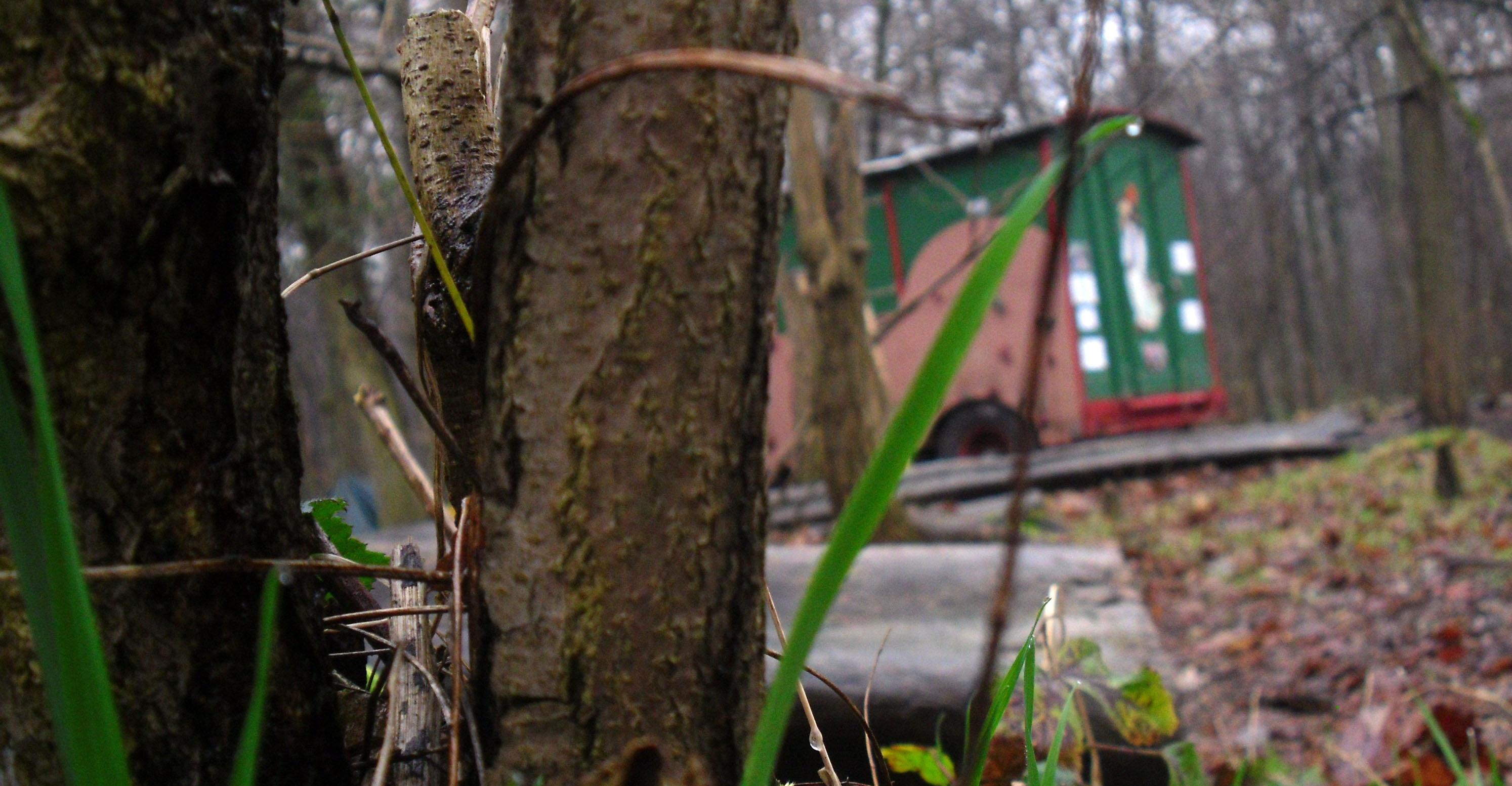 Bauwagen eines Kindergartens im Wald