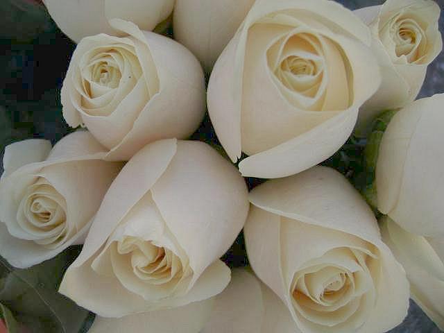 Weiße Rosen wurden aufgestellt, um an die Opfer zu erinnern. Foto: srqpix / flickr (CC BY 2.0)