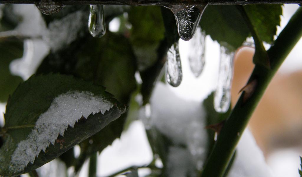 Das Winterwetter in Niederdachsen lies es plausibel erscheinen, das die Schule geschlossen bleibe. Foto: Manu /flickr (CC BY-SA 2.0)